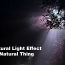 20 Stunning Examples Of Natural Light Effect Photography