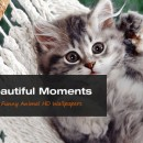 Cute Moments: Funny Animal HD Wallpapers